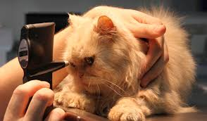 Ветеринарная офтальмология