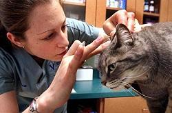 Ветеринарная дерматология
